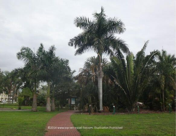 Palm tree arboretum in St. Pete Beach, Florida