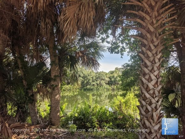 Lush tropical plants at Wall Springs Park in Palm Harbor, Florida