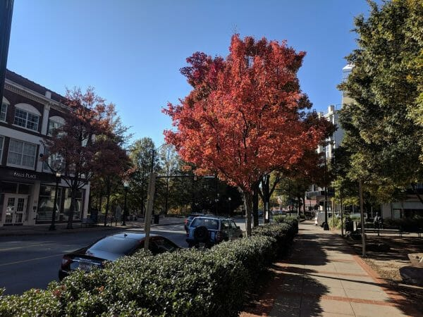 Bright red fall foliage lining Main Street in Greenville, South Carolina
