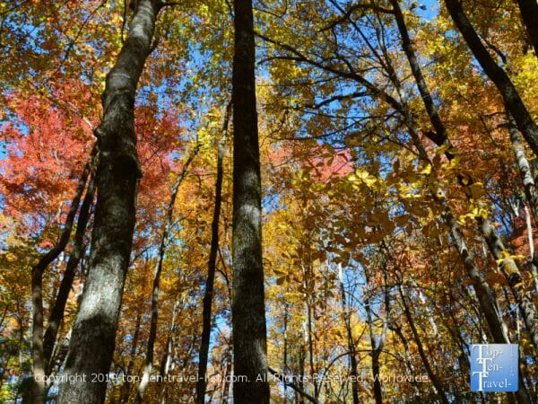 Gorgeous fall colors at Caesars Head State Park in Upstate South Carolina