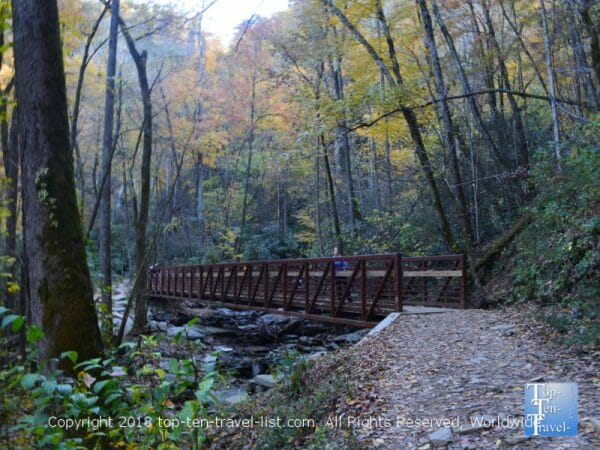 A gorgeous fall leaf peeping walk along the Catawba Falls trail in Western North Carolina