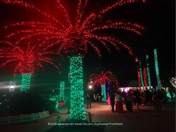 Festive palms at Holiday Lights in the Garden in Largo, Florida