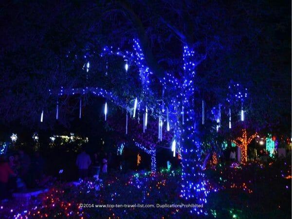 Festive lights at the Florida Botanical Gardens in Largo, Florida
