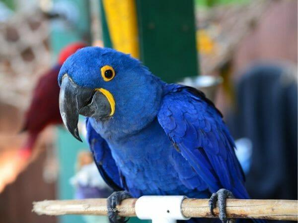 Exotic bird at Sarasota Jungle Gardens
