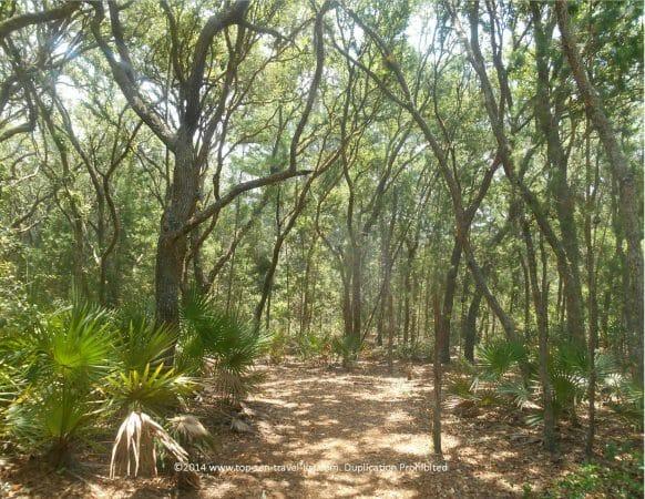 Beautiful hiking trail at Jay B. Starkey Wilderness Park in New Port Richey, Florida