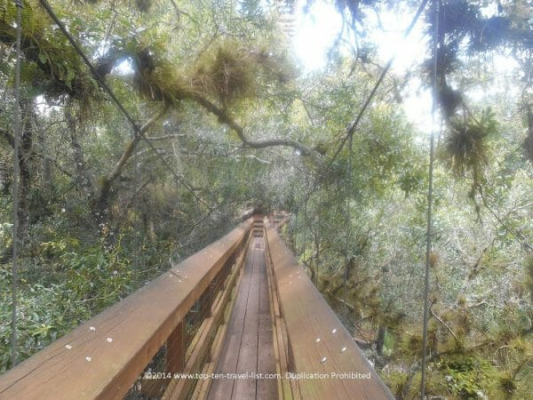 Tree canopy walk at Myakka River State Park in Sarasota, Florida