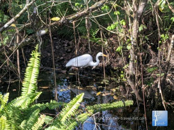 Bird watching at Corkscrew Swamp Sanctuary in Southwest Florida