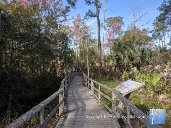 Boardwalk trail at the Corkscrew Swamp Sanctuary in Southwestern Florida