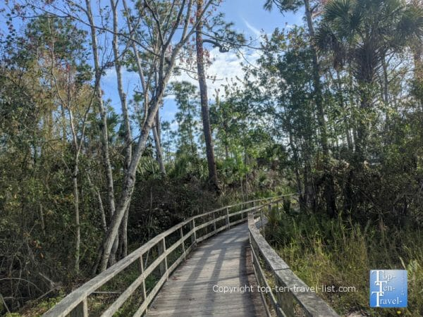 The boardwalk trail at Corkscrew Swamp Sanctuary in Southwest Florida