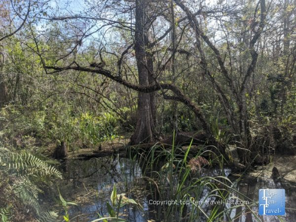 Winter views at Corkscrew Swamp Sanctuary in Southwest Florida