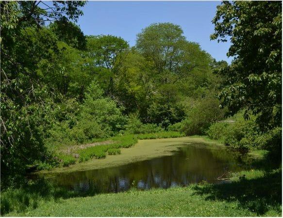 The Arnold Arboretum in Boston, MA