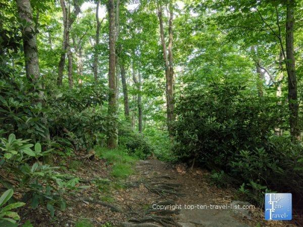 Beautiful hiking trail at Jump Off Rock in Western North Carolina
