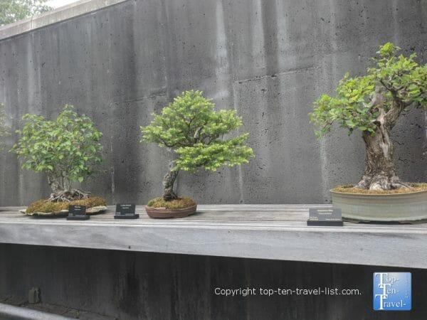 Bonsai exhibit at the North Carolina Arboretum in Asheville, North Carolina