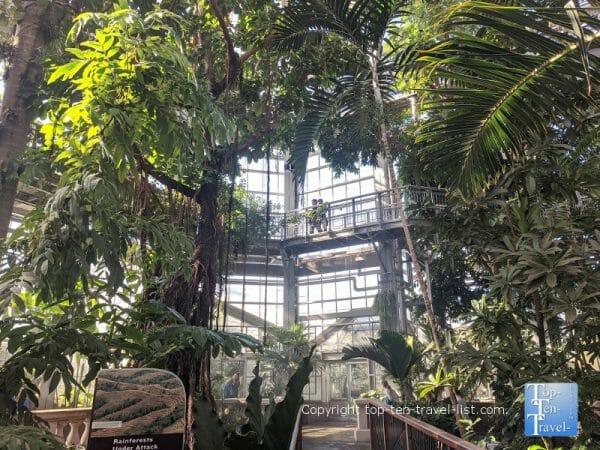 Lush rainforest at the US Botanical Gardens in Washington DC
