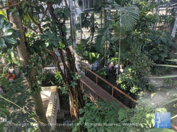 Lush rainforest at the US Botanical Garden in Washington DC