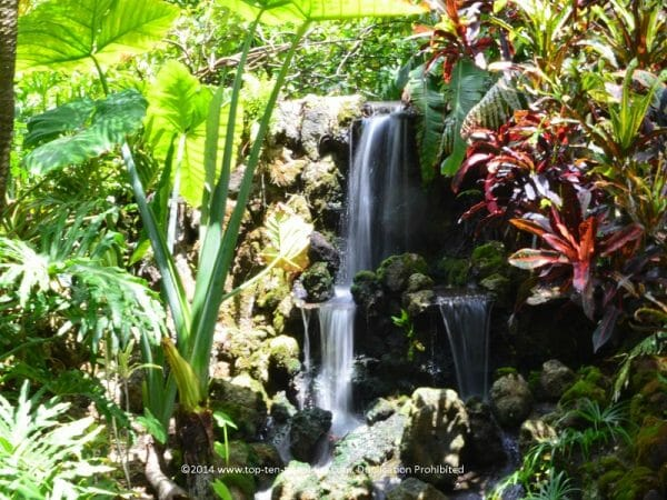 Pretty waterfall at Sunken Gardens in St. Petersburg, Florida