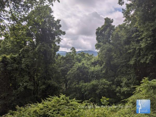 Scenic overlook at Collier Cove Nature Preserve in Arden, North Carolina
