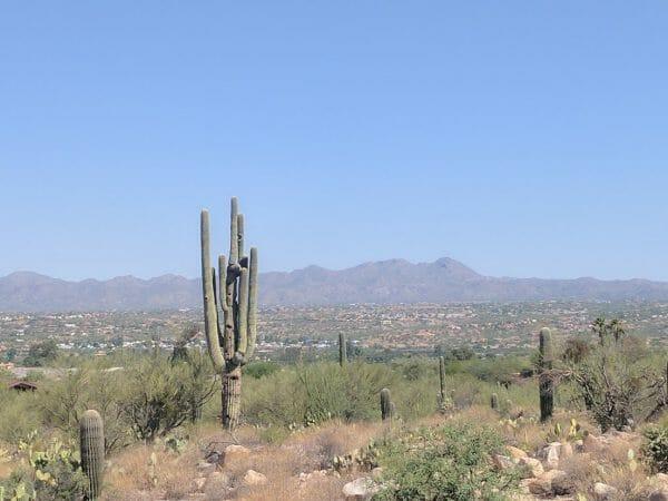 Scenic cacti and mountain views at Tohono Chul Gardens in Tucson, Arizona