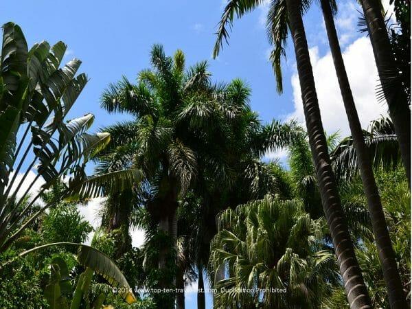 Tropical plant life at Sunken Gardens in St. Petersburg, Florida