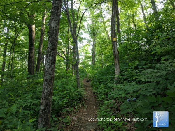 Yellow trail at Jump Off Rock park in Western North Carolina