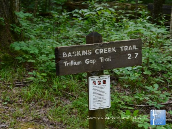 Bakins Creek trail in the Great Smoky Mountains National Park
