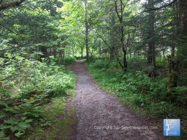 Beautiful scenery along the Richard Balsam trail on the Blue Ridge Parkway