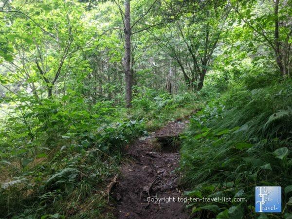 Pretty greenery along the Richard Balsam hike on the Blue Ridge Parkway