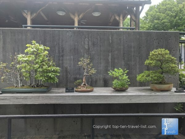 Bonsai at the North Carolina Arboretum in Asheville, North Carolina