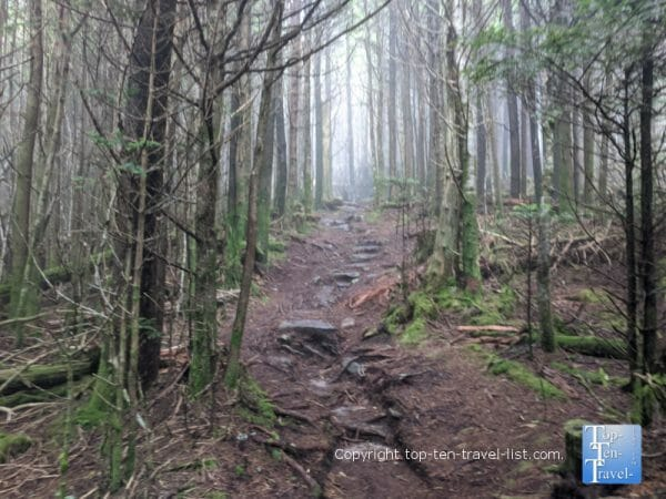 Hiking through tall pine forests on the Richard Balsam trail on the Blue Ridge Parkway