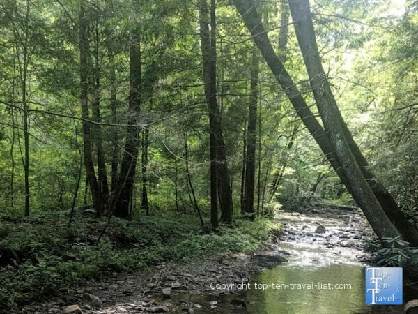 Peaceful stream along the Cataract Falls trail in the Great Smoky Mountains National Park in Tennessee