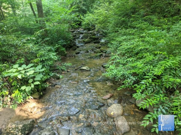 Serene creek views along the Moore Cove Falls trail in Transylvania County, North Carolina