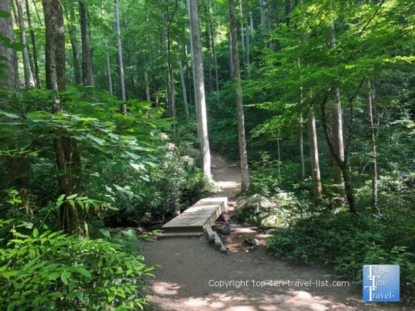 Wooden walkway along the Moore Cove Falls trail in Transylvania County, North Carolina