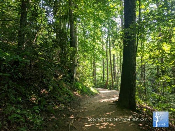 Peaceful stroll along the Moore Cove Falls trail near Brevard, NC