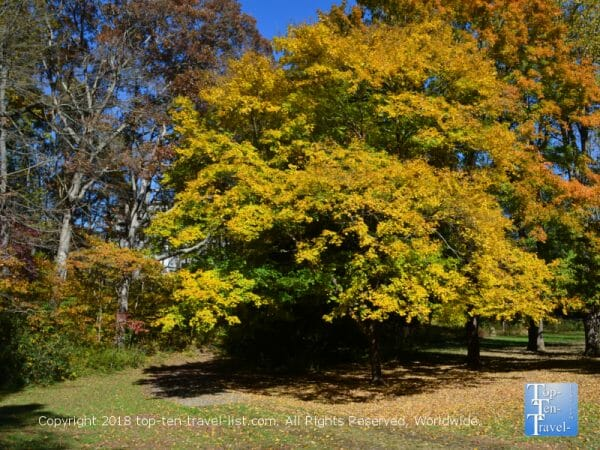 Fall foliage at the Asheville Botanical Gardens