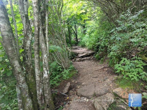 Beautiful views along the Black Balsam Knob trail in Western North Carolina