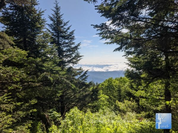 Mountain view along the Balsam nature trail at Mt. Mitchell State Park in Western North Carolina