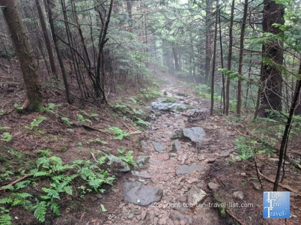 Beautiful hike through the pines along the Richard Balsam trail on the Blue Ridge Parkway
