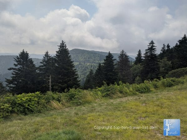 Pretty pines at the Haywood Jackson overlook along the Blue Ridge Parkway