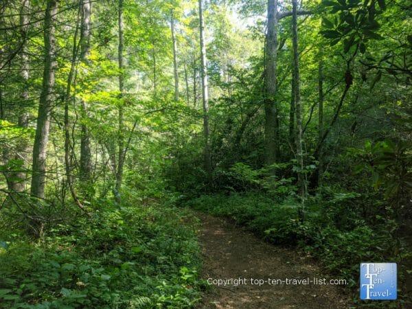 Hiking the shady Carolina Mountain trail at the North Carolina Arboretum in Asheville, NC