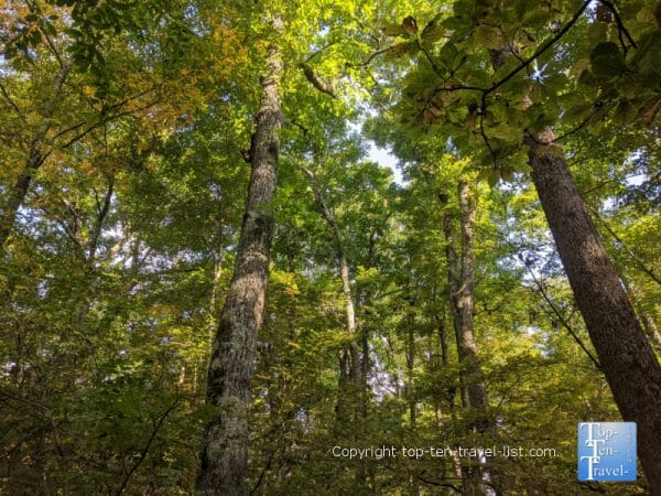 Hint of fall foliage along the Flat Rock hiking trail on the Blue Ridge Parkway in North Carolina