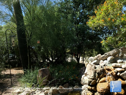 Saguaro Corners Restaurant Preview