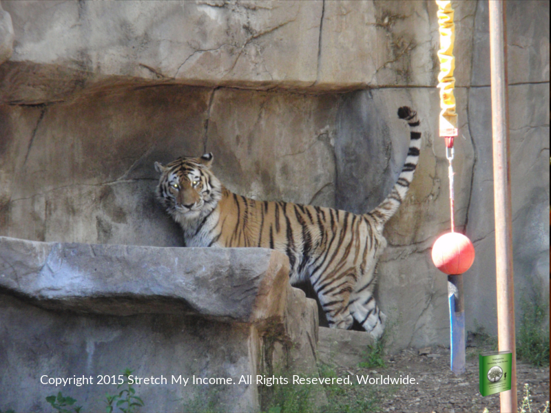 Spend a summer afternoon at Brookfield Zoo