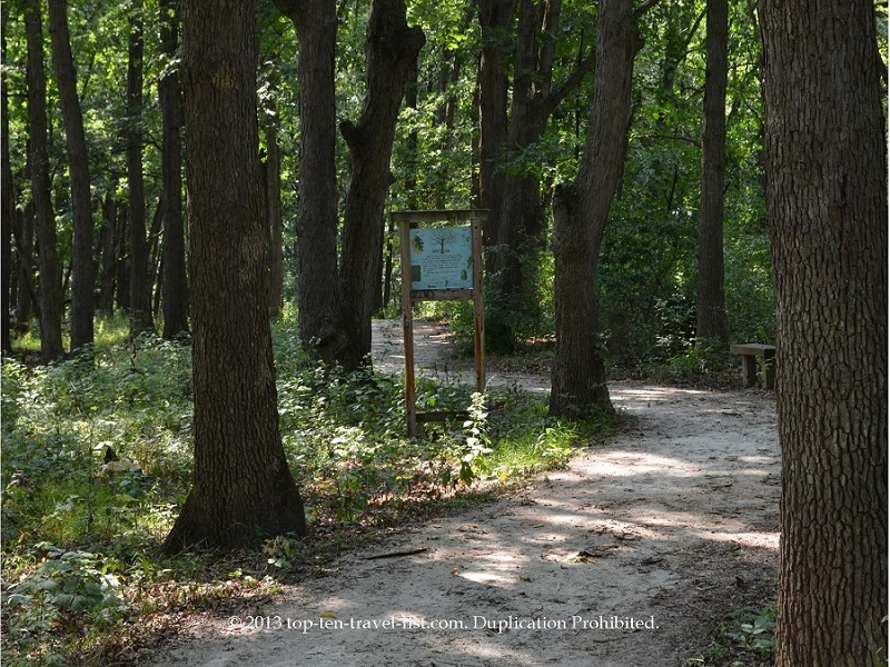 Hike at a Cook County Forest Preserve