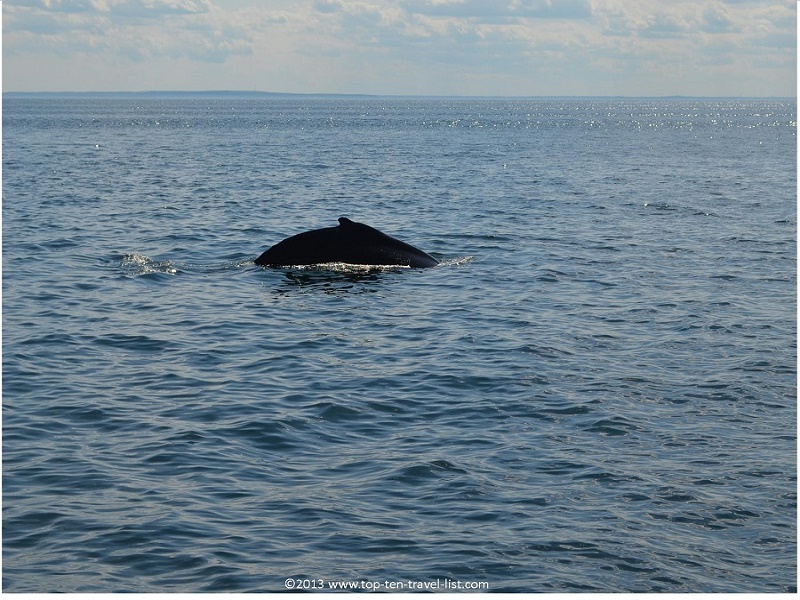 Taking a Whale watching trip in historic Plymouth, Massachusetts