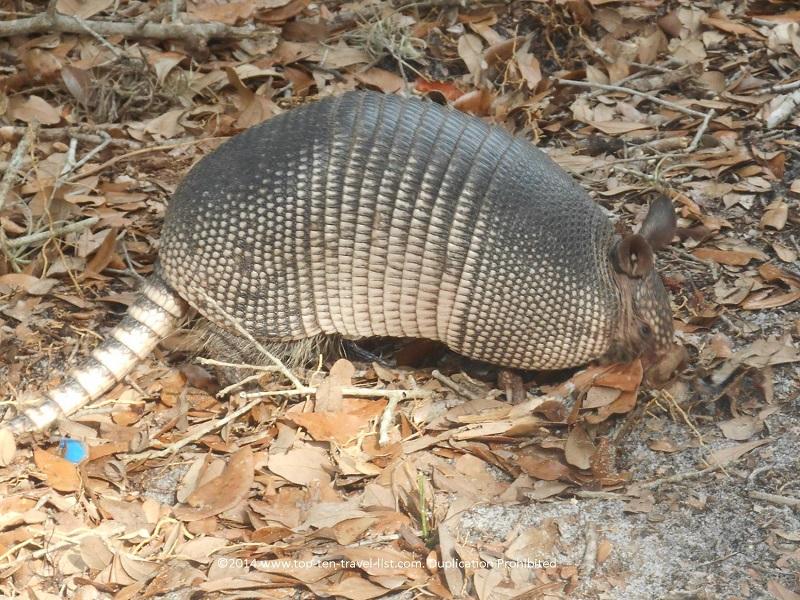 Hike the peaceful, wildlife loaded nature trails of Weedon Island Preserve