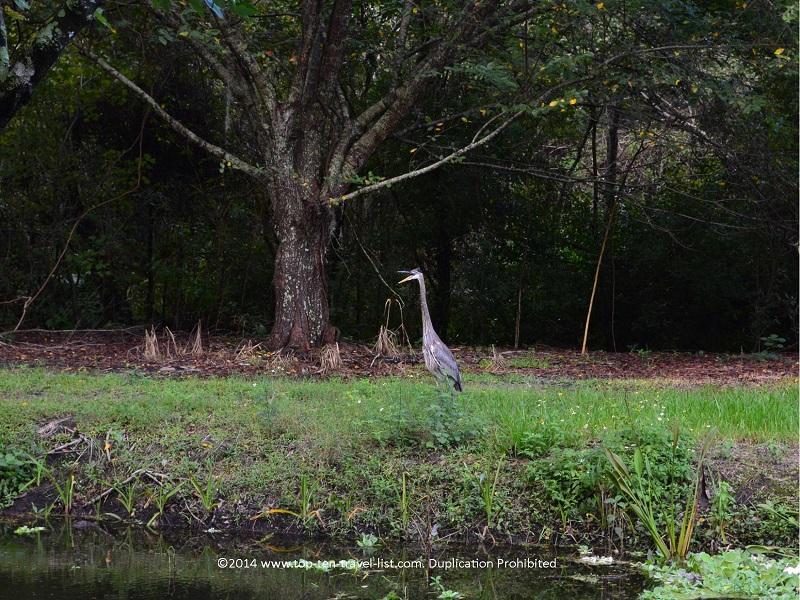 Enjoy quiet nature trails & bird watching at Sawgrass Lake Park