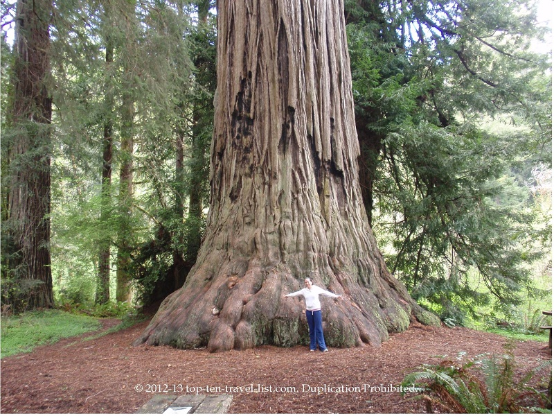 See majestic trees at Redwoods National Park